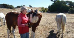 horse-treatment-1024x522