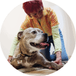 dog-acupressure-circle